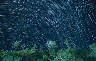 Star trails in the night sky with tree on mountain.