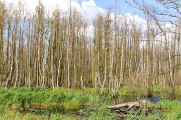 Anfahrt, Usedom, Naturschutzgebiet Unteres Peenetal, Peenetalmoor