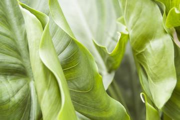 Amazing Wallpaper of Green leafs, macro photo texture el Paramo Colombia