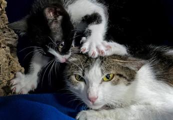 Katzen kratzen