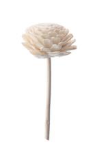 White paper flower on white background