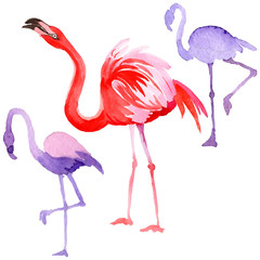 Canvas Prints Sky bird flamingo in a wildlife by watercolor style isolated. Wild freedom, bird with a flying wings. Aquarelle bird for background, texture, pattern, frame, border or tattoo.