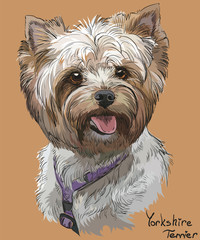 Coloful hand drawing vector portrait of Yorkshire Terrier