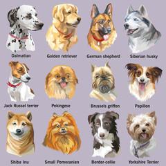 Set of portraits of dog breeds