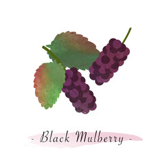 Colorful watercolor texture vector healthy fruit black mulberry