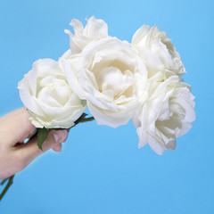 girl`s hand with four white roses on a blue background with an empty space for notes. Romantic card