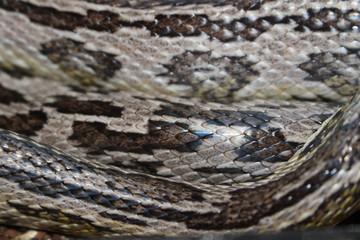 Snake Skin Texture Macro Photograph