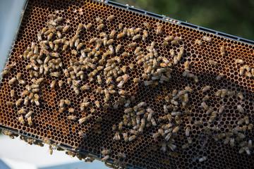 Feeding the queen bee