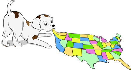 Small puppy playing with a map of the USA