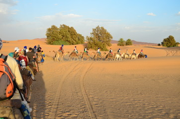 Line of Tourists Riding Dromedaries through Sahara Great Desert in High Atlas Mountains, Morocco
