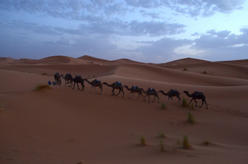 Line of Camels through the sunrise of Sahara Great Desert in High Atlas Mountains, Morocco
