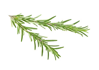Fresh sprigs of rosemary isolated on white background