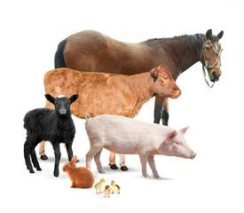 Different animals on white background