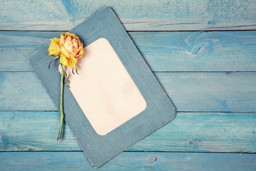Dried yellow rose with blank frame on blue backgroud