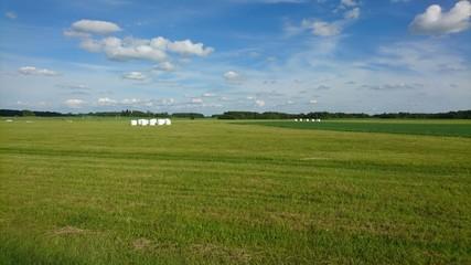 Rolls in meadow. Landscape
