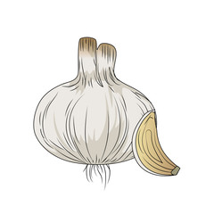 fresh garlic natural vegetable nutrition