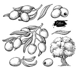 Olive set. Hand drawn vector illustration of branch with food, tree, oil drop.