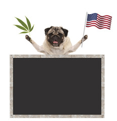 Happy smiling pug puppy dog waving American National flag of USA, with blank blackboard, isolated on white background