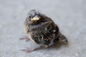 Macro - Baby Bird