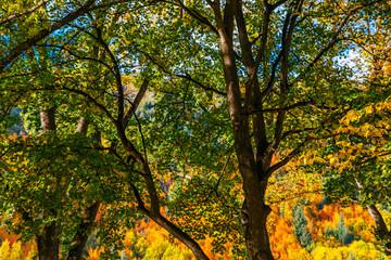 Autumn, Arrowtown, New Zealand