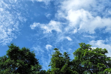 Blue Sky and Cloud with Tree.