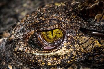 Yellow eyes of hunter .