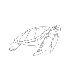 sea turtle hand drawn sketch  illustrations of engraved line