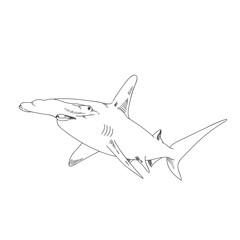 Hammer head shark hand drawn sketch  illustrations of engraved line