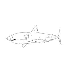 White shark hand drawn sketch  illustrations of engraved line