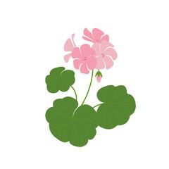 Изолированное изображение одной веточки цветущей герани с розовыми цветами.