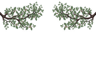 Two green branches of oak with acorns on both sides. Volumetric drawing without a grid and a gradient. Isolated on white background. illustration