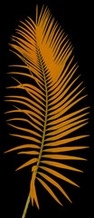 palme orange, fond noir