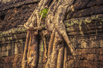Ancient ruins with overgrown trees at Angkor Wat Cambodia