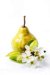 Pear fruit and tree blossom on white