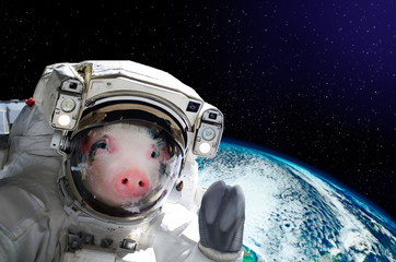 Portrait of a pig astronaut in space on background of the globe. Elements of this image furnished by NASA.