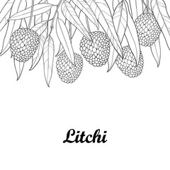 Vector bunch with outline Chinese Lychee or Litchi fruit and leaf isolated on white background. Perennial subtropical tree in contour style for summer design, juicy fresh menu and coloring book.