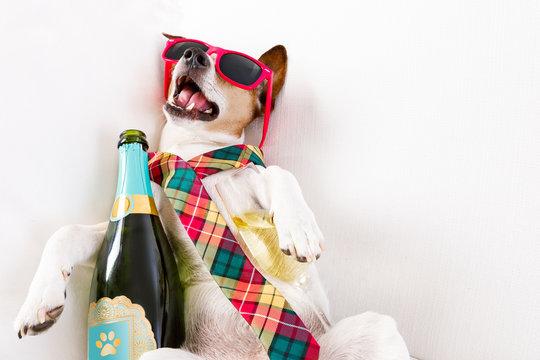 drunk hangover  dog