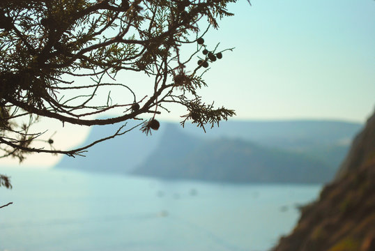 A branch of cypress on the sea and mountains in the backgroun