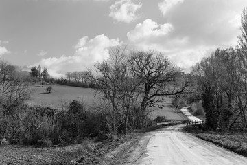 Spoed Fotobehang Grijs Black and white rural landscape with country road