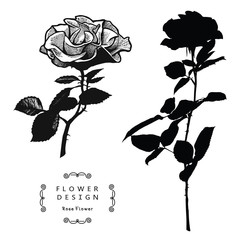 Rose Flowers Vector Silhouette Isolated on White Background.