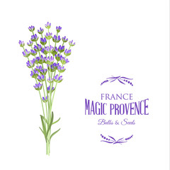 The lavender elegant card with bouquet of flowers and text. Lavender garland for your text presentation. Label of soap package. Label with lavender flowers. Vector illustration.