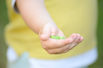 Child holding green peas. Peas in a kid's hand