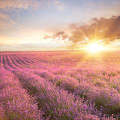 Fotobehang Crimson Sunset over a summer lavender field, looks like in Provence, France. Lavender field. Beautiful image of lavender field over summer sunset landscape.