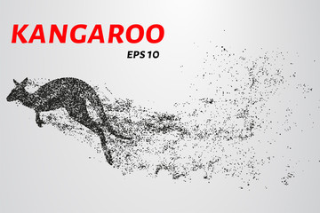 Kangaroo of particles. Kangaroo consists of small circles and dots.