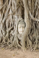 Wat Mahathat, Ayutthaya Province,Thailand. Head of the Buddha on root tree.