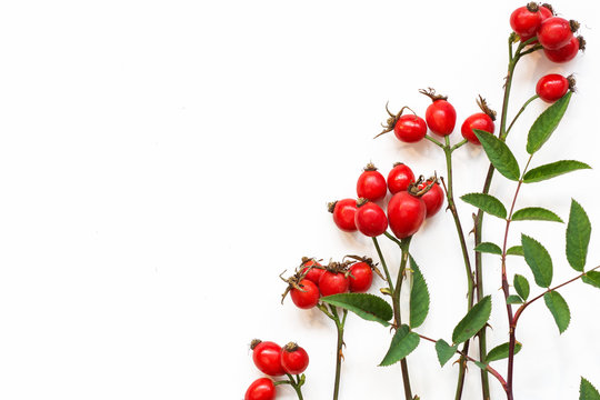 bunch of fresh dog rose on white background. Different types Rosa canina hips - selective focus. room for text