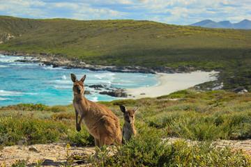 Keuken foto achterwand Kangoeroe Kängurus am Strand