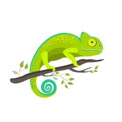 Chameleon icon. Cartoon illustration of walking chameleon vector for web