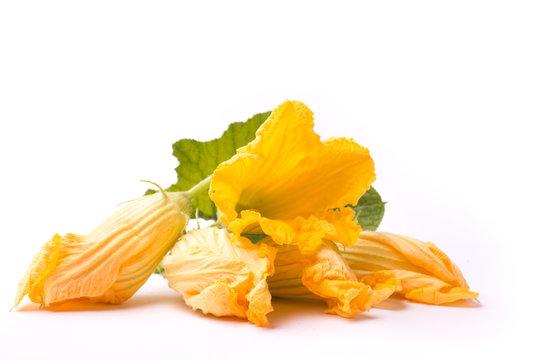 zucchini blossom on white