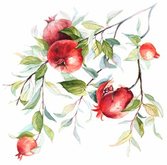 Fruits pomegranate on a branch. Hand drawn watercolor on white background .